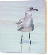 Seagull Stance Wood Print