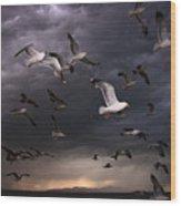 Seagull Storm Wood Print