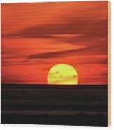 Seagull Sunset Wood Print