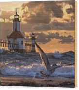 Seagull Takeoff - Tiscornia Beach  Wood Print