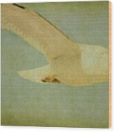 Seagull Texture Wood Print