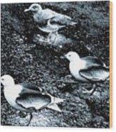 Seagull Trio Wood Print