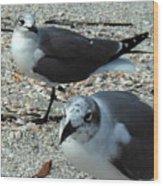Seagulls #3 Wood Print