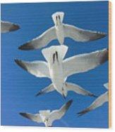 Seagulls #4 Wood Print