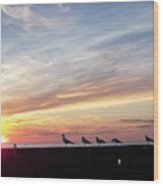 Seagulls And Sunset On Lake Erie Wood Print
