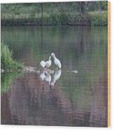 Seagulls At Lake Wood Print