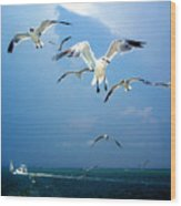 Seagulls  Wood Print by Brittany H