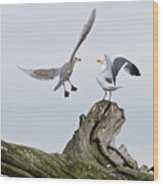 Seagulls In Dispute Wood Print