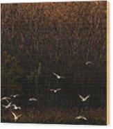 Seagulls In Flight Wood Print