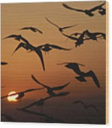 Seagulls In Sunset Wood Print