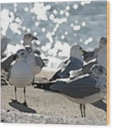 Seagulls In The Cold Sun Wood Print