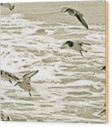 Seagulls Landing Tampa Florida Wood Print