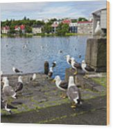 seagulls near a pond in the center of Reykjavik Wood Print