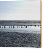 Seagulls On A Sandbar Wood Print