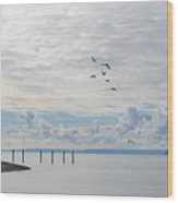 Seagulls Over Admiralty Inlet Wood Print
