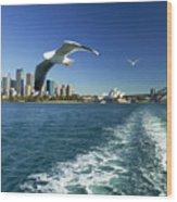 Seagulls Over Sydney Harbor Wood Print