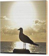 Seagull's Sunrise Silhouette Wood Print