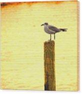 Seagulls Sunset Wood Print