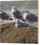 Seaguls Wood Print