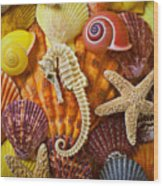 Seahorse And Assorted Sea Shells Wood Print