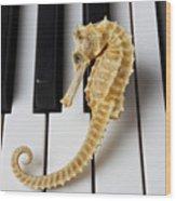 Seahorse On Keys Wood Print by Garry Gay