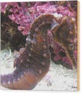 Seahorse4 Wood Print