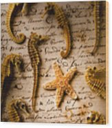 Seahorses And Starfish On Old Letter Wood Print