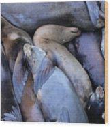 Seal Buddies Wood Print