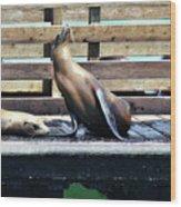 Seal Cheerleader Wood Print