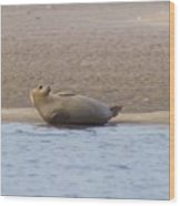 Seal Relaxing On Cupsogue Beach Wood Print