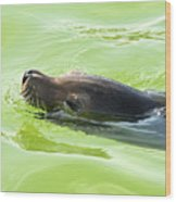 Seal Wood Print