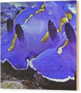 Sealife Underwater Snails Wood Print