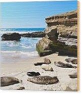 Seals Siesta On La Jolla Beach Wood Print