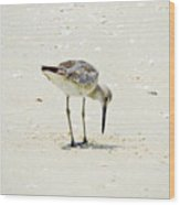 Searching Plover Wood Print