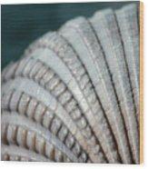 Seashell Designs Wood Print