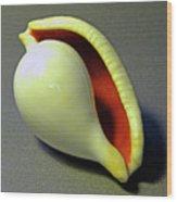 Seashell Egg Cowry Wood Print
