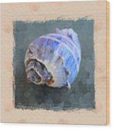Seashell IIi Grunge With Border Wood Print