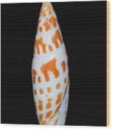 Seashell In Fishnet Wood Print