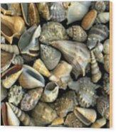 Seashell Medley Wood Print