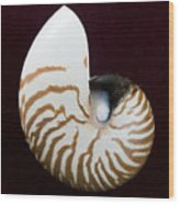 Seashell On Black Background Wood Print