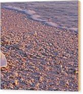 Seashell On The Beach, Lovers Key State Wood Print