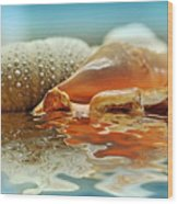 Seashell Reflections On Water Wood Print