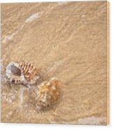 Seashell Turbulence Wood Print