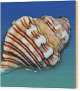 Seashell Wall Art 1 Wood Print