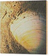 Seashells And Beach Colours Wood Print