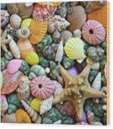 Seashells 3 Wood Print