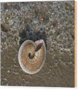 Seashells By The Sea Wood Print