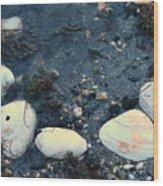 Seashells By The Water Wood Print