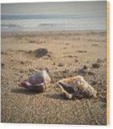 Seashells In The Sand Wood Print