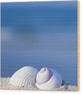 Seashells On The Beach Wood Print